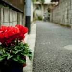 flowers in alley